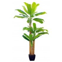 91906-37 / Banana Tree  / Höjd 260 cm