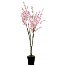 92209-1 / Cherry Tree  / Höjd 190 cm