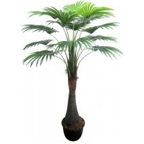 92421-13 / Palm Tree  / Höjd 180 cm