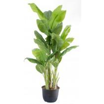 91907-2 / Banana Tree  / Höjd 160 cm
