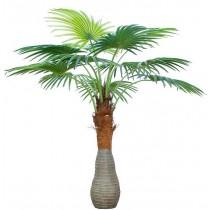 92421-14 / Palm Tree  / Höjd 180 cm
