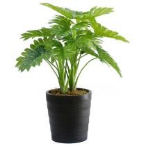92477-1 / Philodendron  / Höjd 70 cm