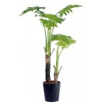 92477-2 / Philodendron  / Höjd 100 cm