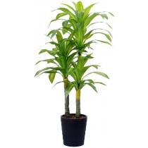 92497-3 / Brazilian Tree  / Höjd 130 cm