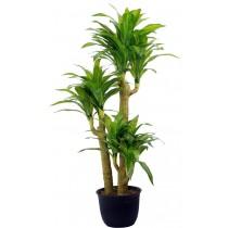 92497-6 / Brazilian Tree  / Höjd 150 cm