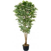 92828-5 / Camellia  / Höjd 230 cm